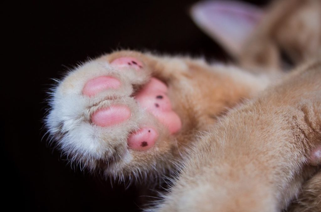Alternatives to Declawing Your Cat