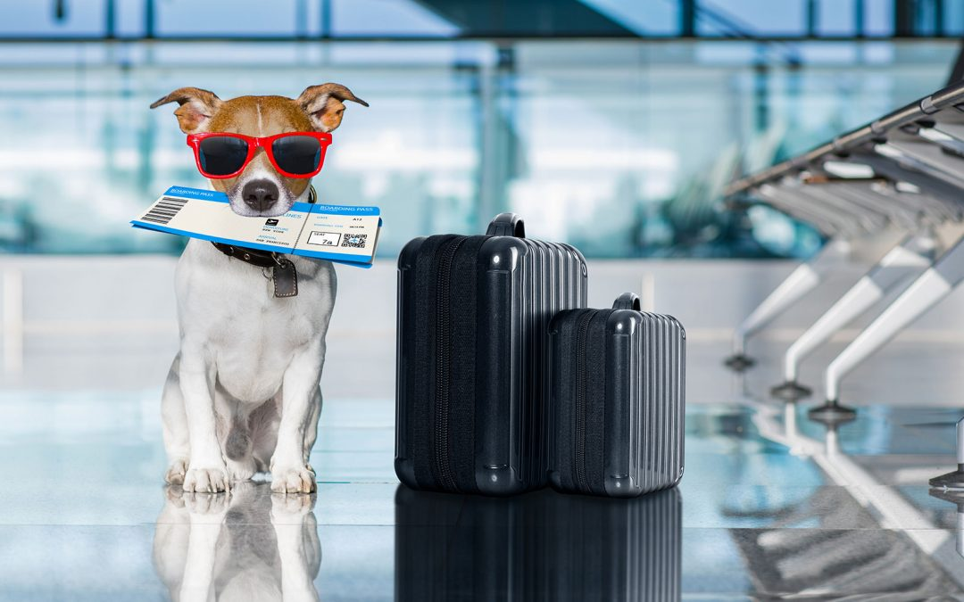 Traveling With Your Cat or Dog