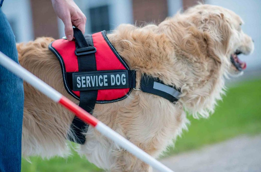 How Therapy and Service Animals Help