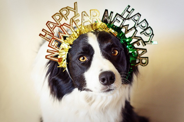 New Years Resolutions for Your Pet